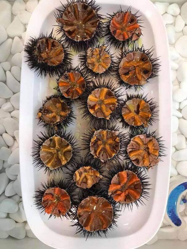 Κοράλι - εικόνα 5