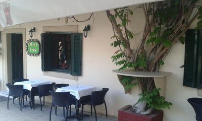 Olive tree - εικόνα 6