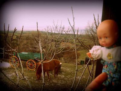 Κέδρος αγρόκτημα - εικόνα 2